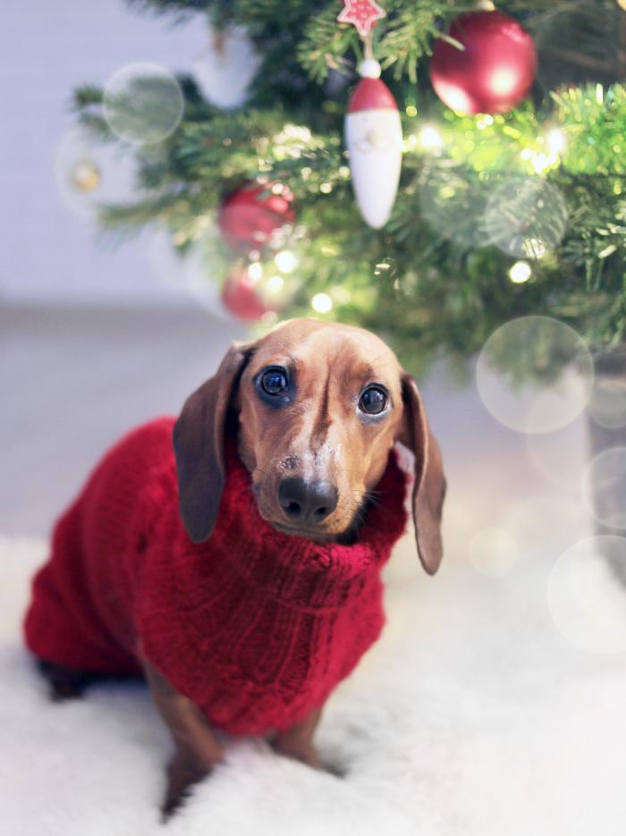adorable-animal-canine-755380